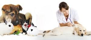 Perros, gatos y enfermedades veterinarias